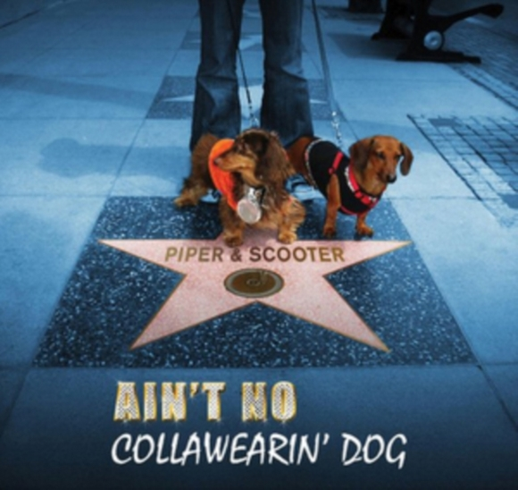 Ain't No Collawearin' Dog