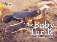The Baby Turtle