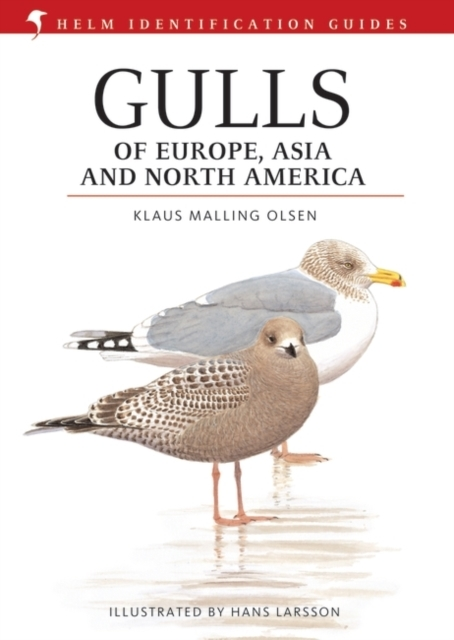 Gulls of Europe, Asia and North America