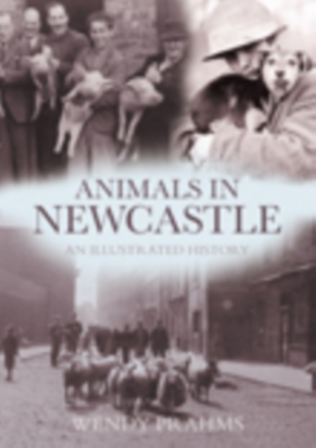 Animals In Newcastle