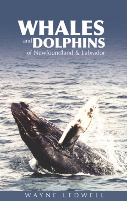 Whales & Dolphins of Newfoundland & Labr