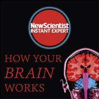 How Your Brain Works: Inside the most complicated object in th