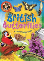 Nature Detective: British Butterflies