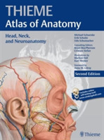 Head, Neck, and Neuroanatomy (THIEME Atl