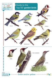 Guide to the Top 50 Garden Birds
