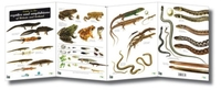 Guide to the Reptiles and Amphibians of