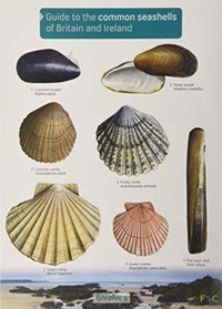 Guide to the Common Seashells of Britain