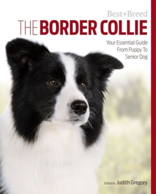 Border Collie Best of Breed