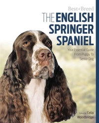 English Springer Spaniel Best of Breed