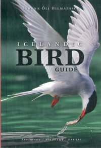 Icelandic Bird Guide: Appearance, Way of